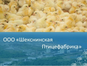 ООО Шекснинская Птицефабрика
